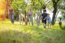 Familie Mehrgeneration Macht Spaziergang Mit Alpakas Im Sommer
