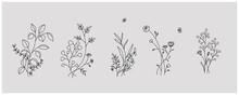 Minimal Botanical Graphic Sketch Line Art Drawing, Trendy Tiny Tattoo Design, Floral Elements Vector Illustration