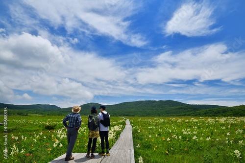 Fototapeta 湿原の花々を楽しむハイカー