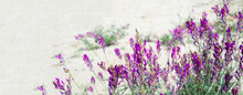 Lilac Flowers On The Sand Dunes. Flower Corner For Post Announcement. Copy Space For Text. Banner.