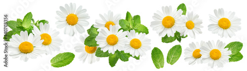 Tela Camomile flowers and mint set isolated on white background