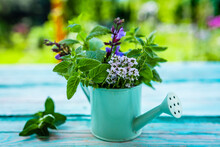 Fresh Herbs In A Small Watering Can On A Wooden Table.