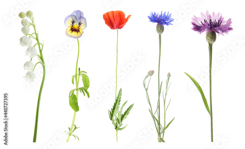 Fotografiet Collection of different beautiful wild flowers on white background