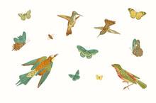 Birds And Butterflies. Vector Vintage Illustration. Set