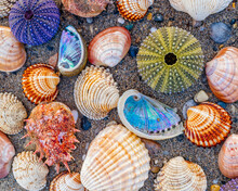 Collection Of Coloful Sea Urchins And Various Shells On Wet Sand Beach, Natural Pattern Background