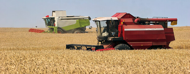 Harvester at work. Wheat field, harvesting, threshing.