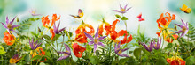 Beautiful Orange And Violet Flowers, Butterflies In Summer Garden. Clematis And Gloriosa Flowers. Summer Floral Concept. Banner.