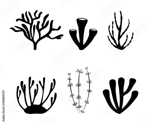 Foto Sea corals of various shapes set