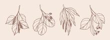 Set Of Hand Drawn Birch, Alder, Willow, Linden