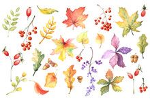 Set Of Colorful Watercolor Autumn Leaves, Berries, Acorns, Rose Hips, Wild Grapes. Forest Design Elements. Fall Illustration For Invitations, Cards