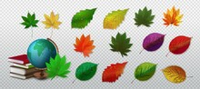 Autumn Leaves, Wonderful Elements To Your Design. Falling Poplar, Beech Or Elm And Aspen Autumn Leaves For Seasonal Holiday Greeting Card Design