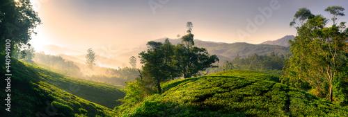 Fotografie, Obraz Panorama of a tea plantation at sunrise, Kerela, India