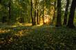 Park Zielona pola czosnku niedźwiedziego