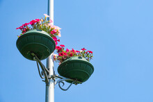 Red Flowers In A Pot On A Pole
