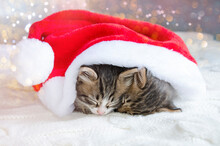 Two Cute Kittens Snuggled Up To Each Other And Sleep Soundly. Small, Pets Are Waiting For Gifts For Christmas. The Animals Were Given To The Children For The New Year.
