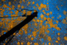Abstract Background Of Yellow Moss On A Blue Sheet.