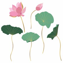 Set Of Hand Drawn Lotus Flowers And Leaves. Sketch Floral Botany Collection In Graphic Colored Golden Style Bloomed, Buds And Leaves.