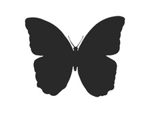 Black Silhouette Of A Butterfly Morpho Peleides - Stock Vector
