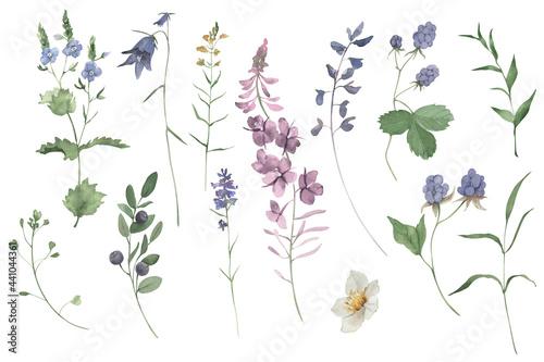 Fotografie, Obraz Handpainted watercolor wildflowers and herbs set