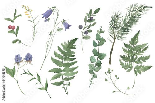 Fototapeta Handpainted watercolor wildflowers and herbs set