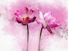 Watercolor Painting Of Vibrant Pink Lotus Flowers. Botanical Art. Decorative Element For A Greeting Card, Scrapbook Or Wedding Invitation