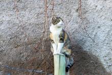 Gato En Mendoza, Argentina
