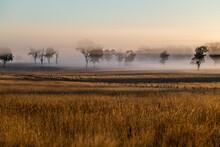 Foggy Early Morning Sunrise Landscape With Trees And Grass