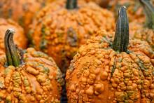 Bumpy Orange Pumpkins Closeup. Farm Market Or Pumpkin Patch