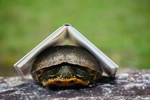 夏の公園にいる亀と本の風景