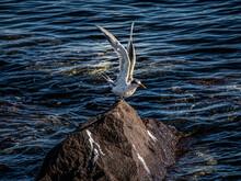 Tern Wings Lifted