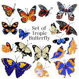 Set of colorful butterflies, vector illustration. Collection of hand drawing butterflies.