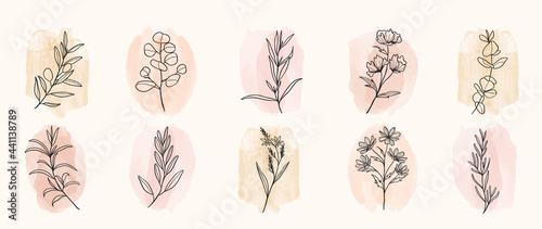 Fotografie, Obraz Minimal botanical hand drawing design for logo and wedding invitation
