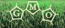 Graphic Concept For Industrialized Farming And Food Production. Genetically Modified Crop Covered With Green Toxic GMO Gas.