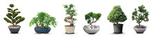 Set With Different Beautiful Bonsai Trees On White Background. Banner Design