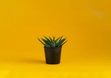 Small Green Plant In Black Plastic Pot On Vivid Yellow Background.