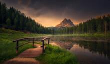 The Bridge To Nature