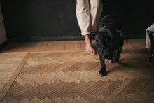 Low Section Of Dog On Hardwood Floor At Home