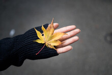 Close-up Of Woman Hand Holding Maple Leaf During Autumn