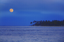 Huge Yellow Moon Hangs Over The Bay Where Coconut Palms Lean Over The Ocean Waves