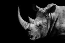Rhinoceros , Animal Mammal Rhino , IsolatedBlack