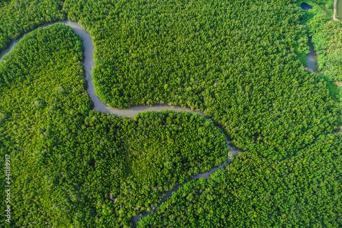 Fototapeta Aerial view green mangrove tree forest sea gulf eco environment system