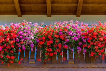 Flower Decorated Terrace Of A House. Background Of Multiple Flowers In Balcony.