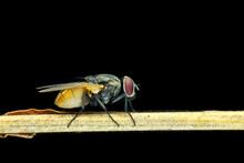 Fly On Black Background