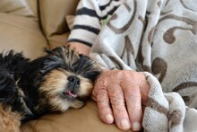 Puppy Comforting Elderly Woman