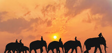 Silhouette Of Elephants Caravan With Elephant Keepers Riding On Elephant Neck Walking Together