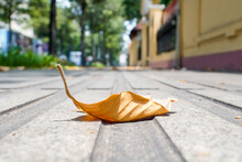 Close-up Of Autumn Leaves On Street