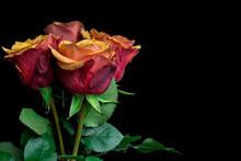 Macro Close Up Of Fresh Orange And Red Roses On  Black Background