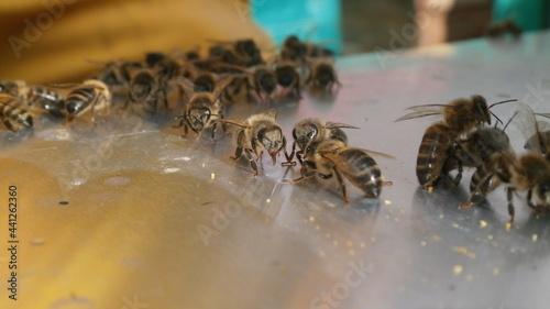 Foto bee and honey bee