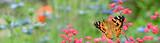 Fototapeta Natura - Schmetterling 852