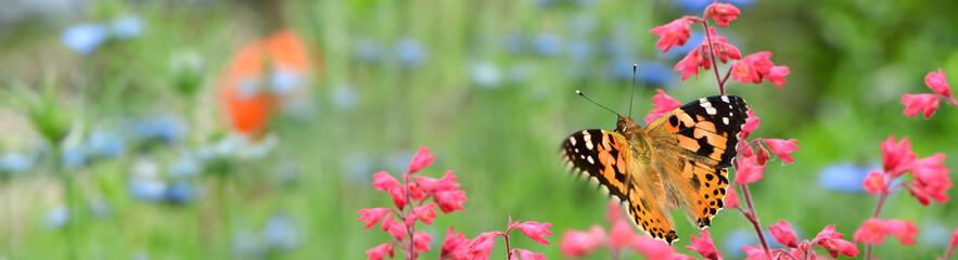 Schmetterling 852